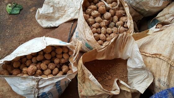Bắt quả tang trộn đất vào khoai tây Trung Quốc để bán giá cao ảnh 4