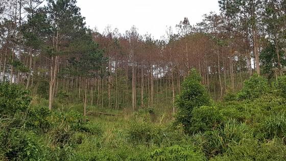 Đình chỉ công tác phó chủ tịch xã để phá hơn 39.000m² rừng phòng hộ ảnh 5