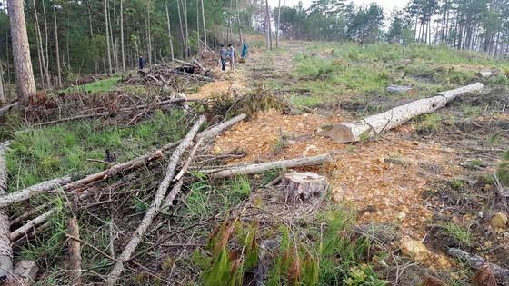 Đình chỉ công tác 15 ngày cán bộ quản lý rừng để phá 39.808m² rừng  ảnh 1