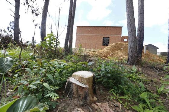 Điều tra, xử lý vụ phá rừng lấn đất xây nhà, trồng cà phê ảnh 5