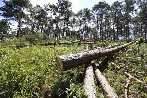 Điều tra, xử lý vụ phá rừng lấn đất xây nhà, trồng cà phê ảnh 1
