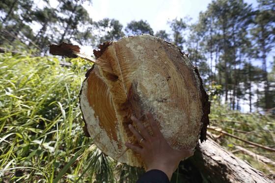 Điều tra, xử lý vụ phá rừng lấn đất xây nhà, trồng cà phê ảnh 2