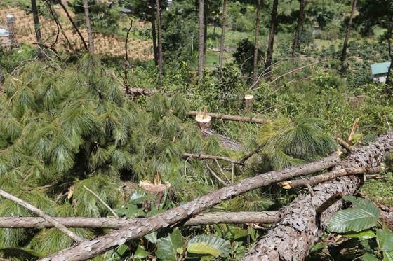 Điều tra, xử lý vụ phá rừng lấn đất xây nhà, trồng cà phê ảnh 3