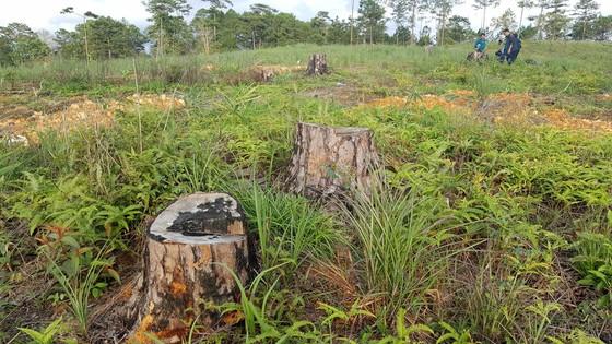 Yêu cầu kiểm tra, xử lý các vụ phá rừng tại Lâm Đồng ảnh 1