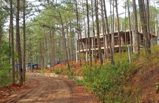Dự án nghỉ dưỡng cao cấp phá rừng trái phép ở hồ Tuyền Lâm ảnh 3