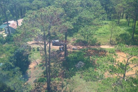 Hàng loạt cây thông ở Đà Lạt bị 'bức tử' trong khu dân cư ảnh 9