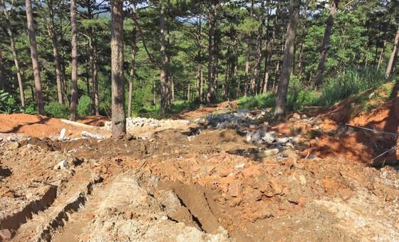 Giải toả nhiều công trình trái phép dưới tán rừng thông ở Đà Lạt ảnh 3