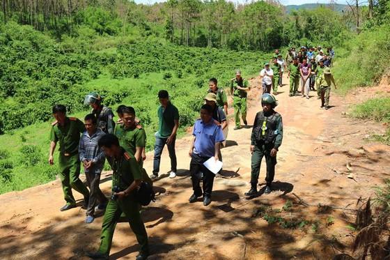 Khởi tố đối tượng chủ mưu phá 10ha rừng thông tại Lâm Đồng ảnh 1
