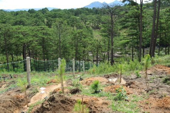 Giải toả rào chắn phân lô đất rừng Đà Lạt ảnh 3