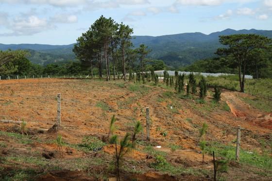 Giải toả rào chắn phân lô đất rừng Đà Lạt ảnh 6
