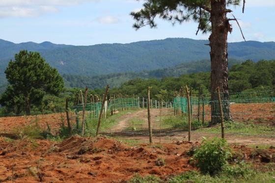 Giải toả rào chắn phân lô đất rừng Đà Lạt ảnh 5