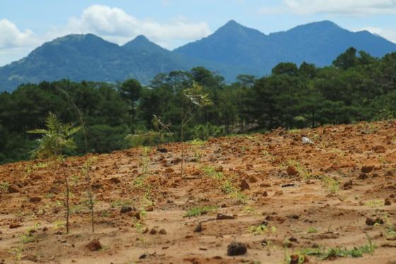 Giải toả rào chắn phân lô đất rừng Đà Lạt ảnh 7