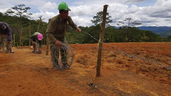 Giải toả rào chắn phân lô đất rừng Đà Lạt ảnh 1