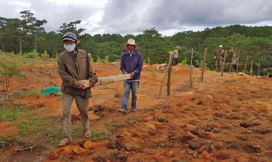 Giải toả rào chắn phân lô đất rừng Đà Lạt ảnh 2