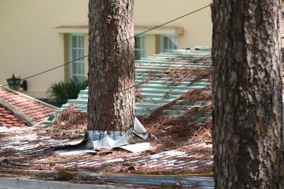 Những cây thông Đà Lạt bị 'nhốt' trong nhà ảnh 2