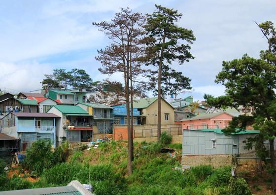 Những cây thông Đà Lạt bị 'nhốt' trong nhà ảnh 8