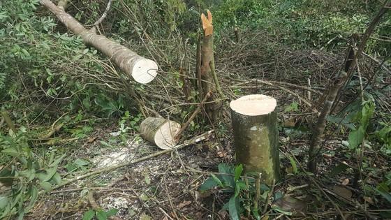 Bắt 11 đối tượng đem cưa máy phá rừng phòng hộ ở Đà Lạt ảnh 5