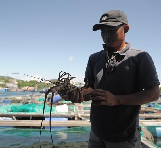 Tảo độc xuất hiện dày đặc trên vịnh Vân Phong ảnh 1