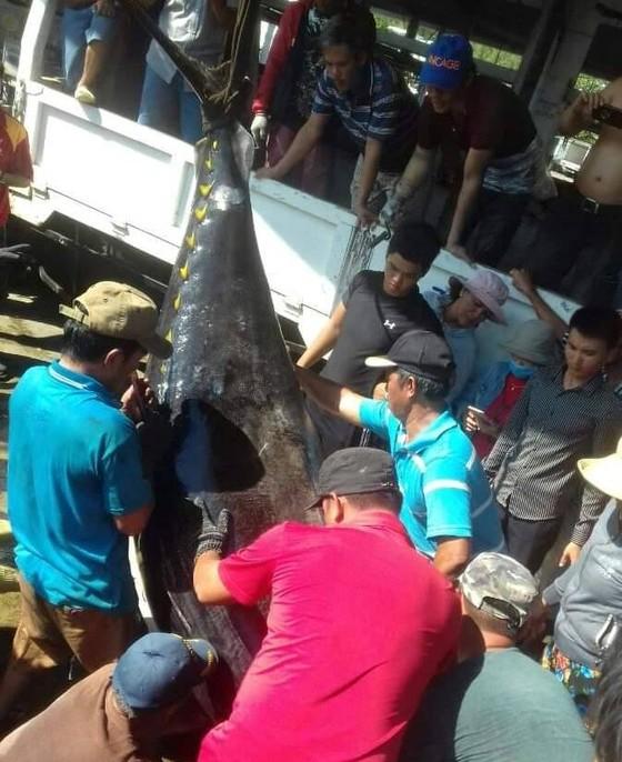 Lần đầu tiên câu được cá ngừ vây vàng nặng gần 400kg ảnh 1