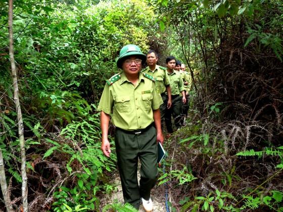Không thể nói dối về thực trạng rừng Việt Nam ảnh 1