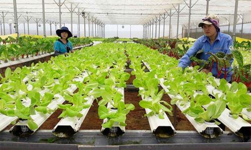 """10 nông dân nhận giải """"Tôi là nông dân 4.0"""" ảnh 1"""