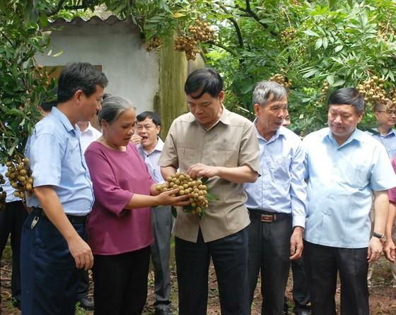 Giám đốc Sở NN-PTNT tỉnh Hưng Yên trả lời về thông tin nhãn nhúng lưu huỳnh ảnh 1