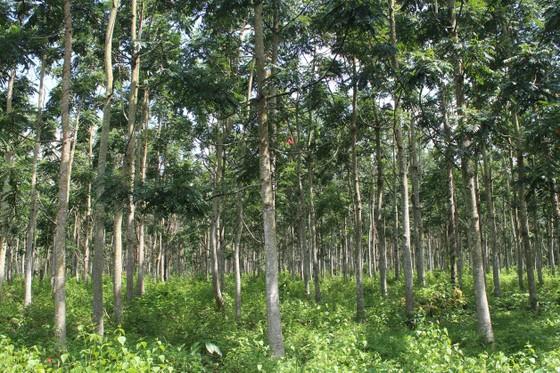Xuất siêu hơn 4 tỷ USD, cả nước trồng thêm 137.000ha rừng để xuất khẩu ảnh 4