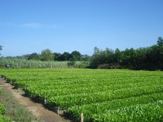 Xuất siêu hơn 4 tỷ USD, cả nước trồng thêm 137.000ha rừng để xuất khẩu ảnh 3
