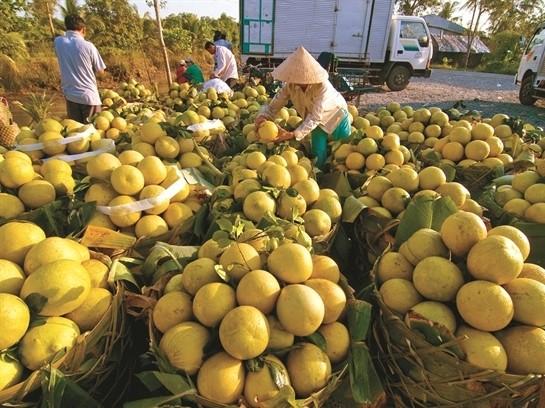 Ra mắt sàn giao dịch nông sản trực tuyến ảnh 2