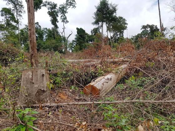 Sau 3 năm có lệnh đóng cửa rừng, đề nghị xử lý các cá nhân, tập thể làm mất rừng tự nhiên ảnh 1