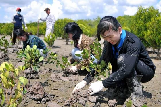 Sau 3 năm có lệnh đóng cửa rừng, đề nghị xử lý các cá nhân, tập thể làm mất rừng tự nhiên ảnh 2