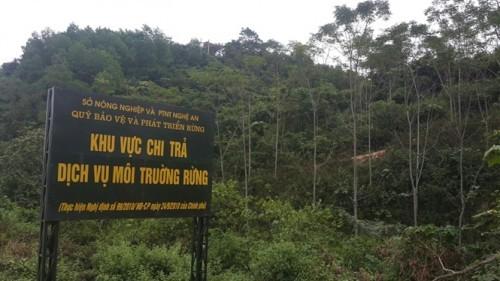 Chuyển gần 2.300 tỷ đồng vào tài khoản của 54.167 chủ rừng  ảnh 1