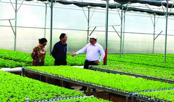 Sản xuất nông sản theo tiêu chuẩn VietGap: Dễ tăng diện tích, khó tìm đầu ra ảnh 1