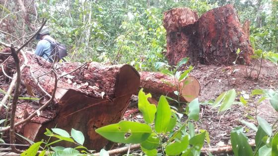 Đề nghị khởi tố vụ án phá rừng trong khu bảo tồn thiên nhiên Tà Cú ảnh 3