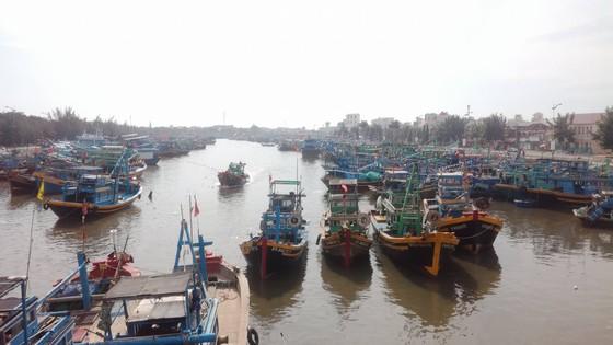 Ngư dân Bình Thuận tất bật chuẩn bị ra khơi sau bão ảnh 2