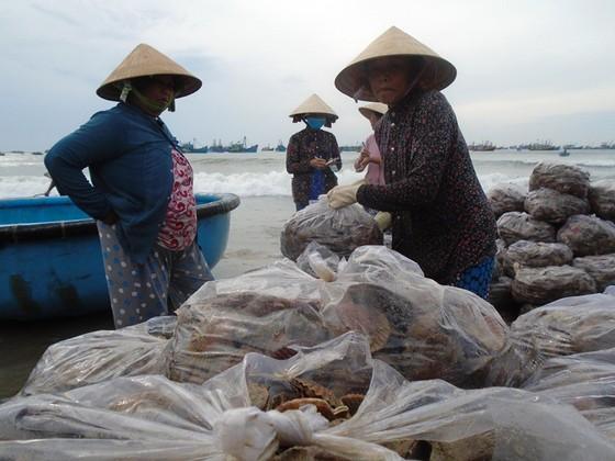 Ngư dân Mũi Né được mùa sò điệp, giá một ký chỉ bằng một gói mỳ tôm ảnh 2
