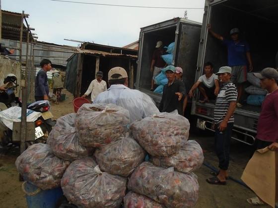 Ngư dân Mũi Né được mùa sò điệp, giá một ký chỉ bằng một gói mỳ tôm ảnh 4