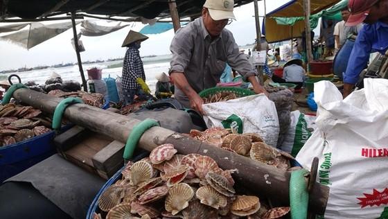 Ngư dân Mũi Né được mùa sò điệp, giá một ký chỉ bằng một gói mỳ tôm ảnh 3