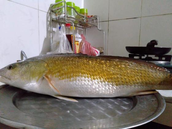 VIDEo: Thanh niên đi câu lúc rạng sáng bắt được cá lạ nghi là cá sủ vàng ảnh 1