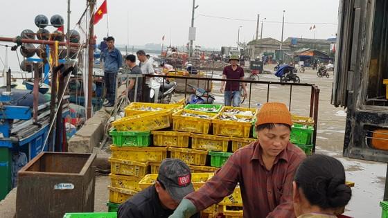 Nhiều ngư dân Bắc miền Trung tiếp tục trúng đậm cá trích, cá cơm biển ảnh 7