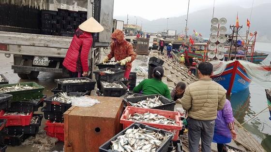 Nhiều ngư dân Bắc miền Trung tiếp tục trúng đậm cá trích, cá cơm biển ảnh 8