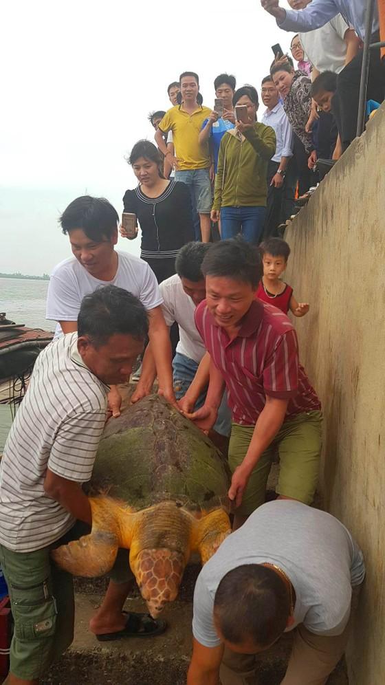 Thả rùa biển quý hiếm về lại môi trường tự nhiên ảnh 2
