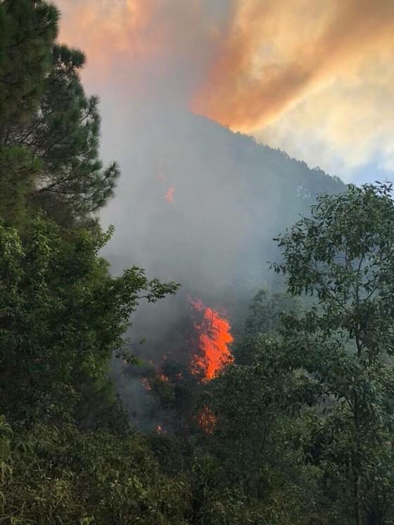 Nhiều diện tích rừng thông ở Hà Tĩnh bị cháy ảnh 2