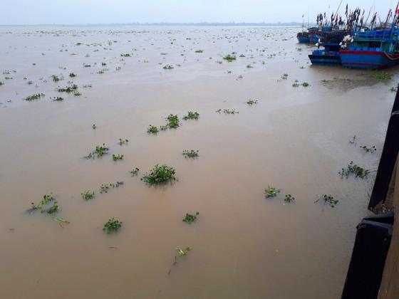 """Bạt ngàn cây bèo """"bủa vây"""" cảng cá lớn nhất ở Hà Tĩnh ảnh 1"""