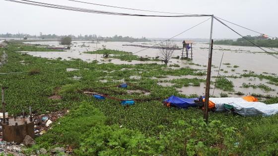 """Bạt ngàn cây bèo """"bủa vây"""" cảng cá lớn nhất ở Hà Tĩnh ảnh 4"""