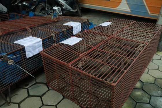 Triệt phá vụ nuôi nhốt, buôn bán trái phép 215 cá thể tê tê ở Hà Tĩnh ảnh 1