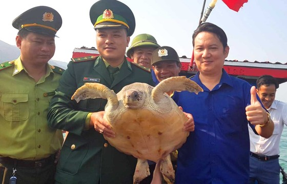 Thả con rùa quý hiếm về lại môi trường biển ảnh 2