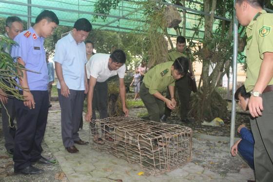 Vườn Quốc gia Vũ Quang tiếp nhận cá thể khỉ mốc quý hiếm ảnh 1