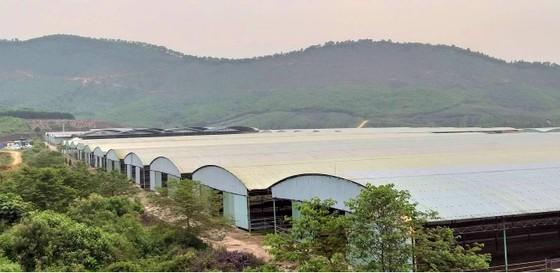 Rà soát tổng thể dự án chăn nuôi bò Bình Hà ảnh 2