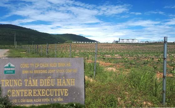 Rà soát tổng thể dự án chăn nuôi bò Bình Hà ảnh 1